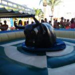 Toro meccánico - Wandaparc